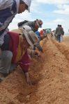 Economía orureña se contrae por bajos precios de minerales